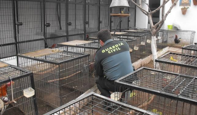 La Guardia Civil detiene a un hombre por robar gallos y maltratarlos