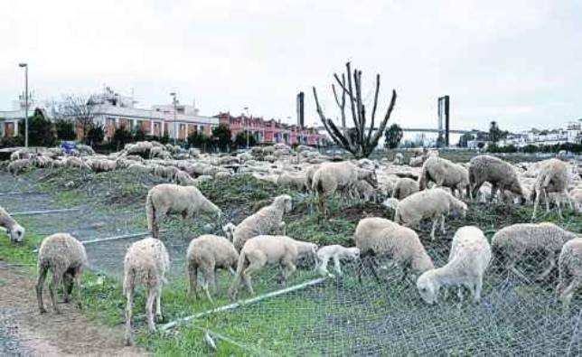 Caminos de ganado que ya no lo son