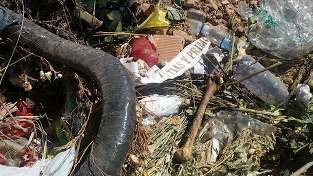 Aparecen restos de ataúdes y currículos de los vecinos