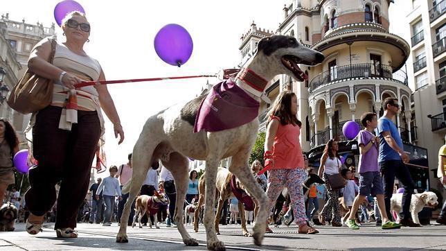 Más de mil galgos pasean por el centro de Sevilla contra el maltrato animal