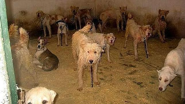 Una mujer castra a lo vivo a su mascota - Perrera de vilafranca ...
