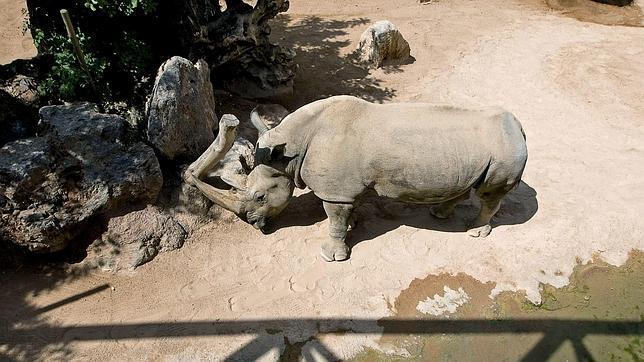 R mulo el rinoceronte que cambi valencia por sevilla - Entradas baratas castillo de las guardas ...