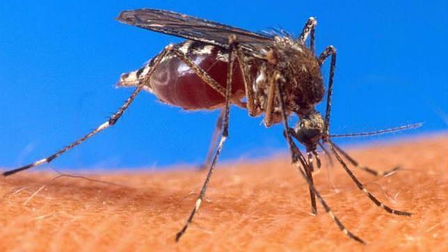 Consejos para evitar las picaduras de los mosquitos - abcdesevilla.es