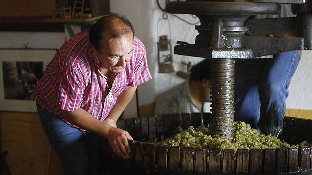 Pisada de la uva, un reclamo turístico de Villanueva del Ariscal