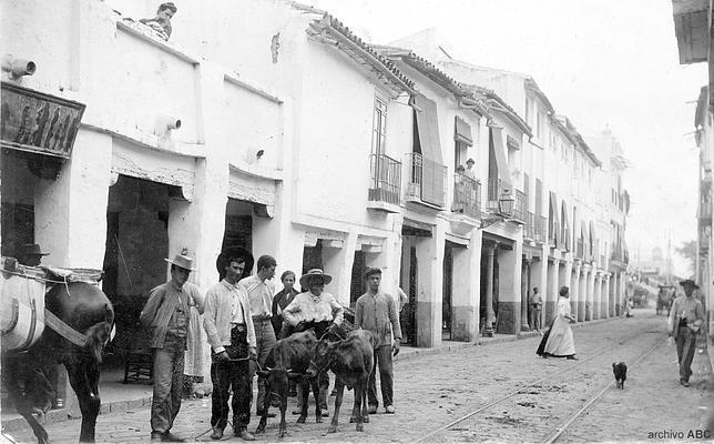 Colección gráfica de ABC: terneros en la calle San Jacinto