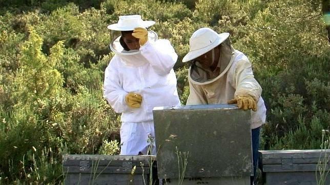 Jaén producirá unos 450.000 kilos de miel esta campaña