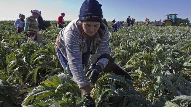 Jóvenes trabajando en el campo andaluz - ABC de Sevilla