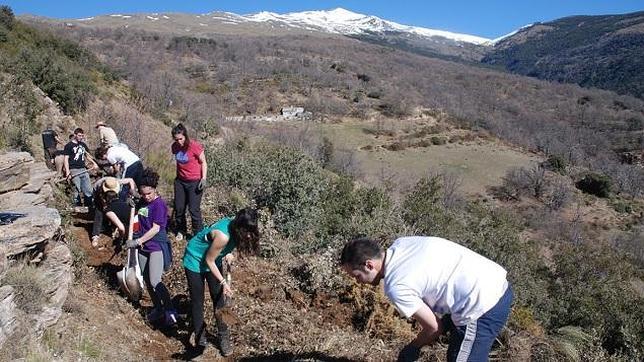 Una acequia medieval de la Alpujarra vuelve a funcionar después de 30 años
