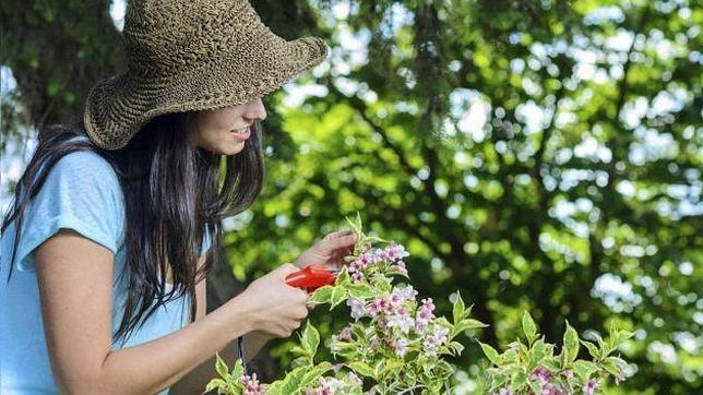 C mo cuidar las plantas en verano for Como cuidar las plantas