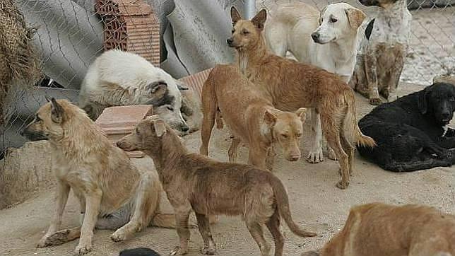 La protectora de m laga ha recogido este a o a for Protectora de animales malaga ciudad jardin