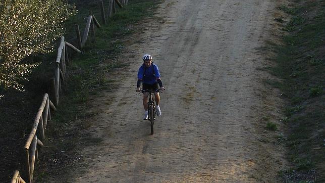 Un ciclista transita por el Corredor Verde del Área Metropolitana de Sevilla
