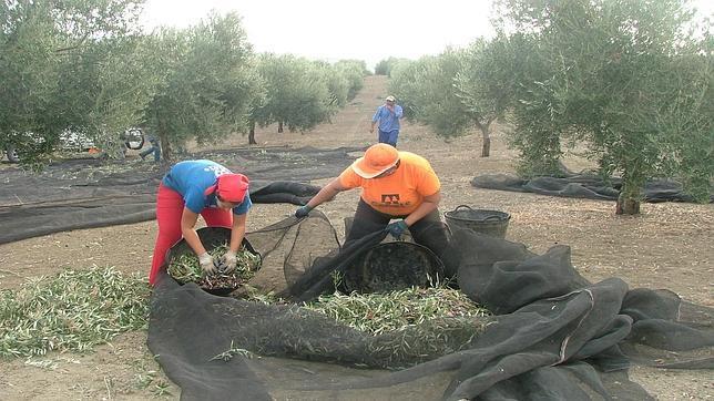 Empleo reducirá a 20 las peonadas del subsidio agrario