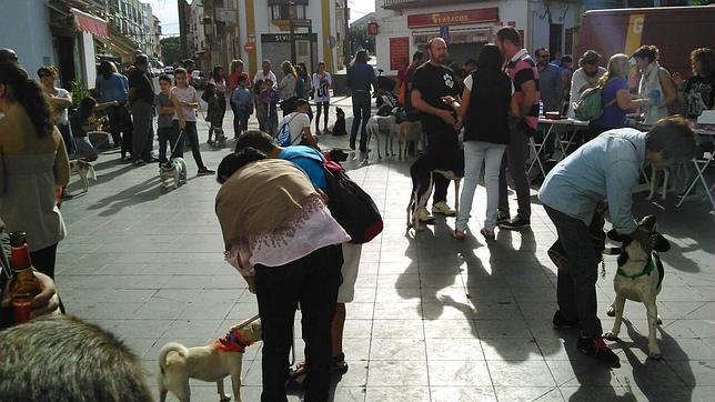 Se necesitan voluntarios para proteger a los animales en Utrera