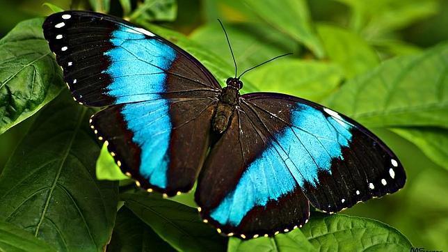 Miles de mariposas en m laga for Villas las mariposas