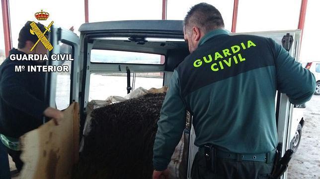 La Guardia Civil detiene a tres personas por el robo de 16 toneladas de aceituna
