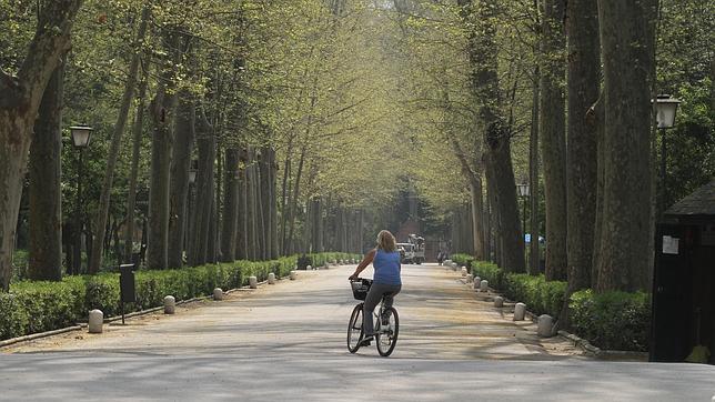 Parque de María Luisa, en Sevilla capital