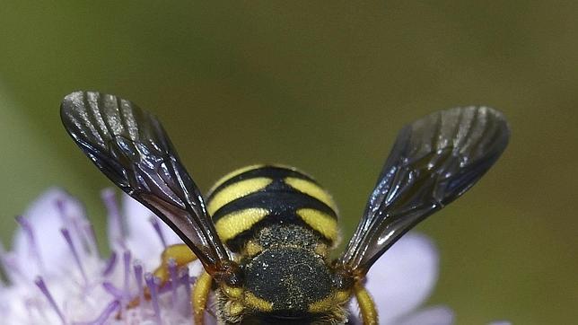 Picaduras de abejas y avispas que matan