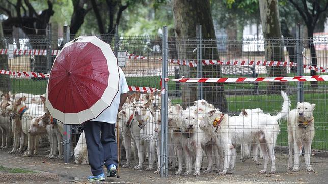 La lluvia deslució la concentración de rehalas de la edición del año pasado de Intercaza