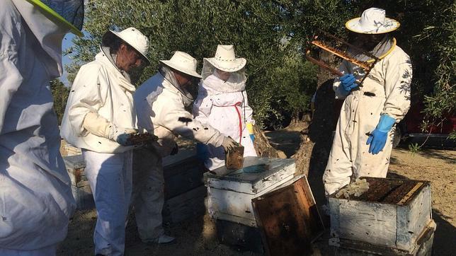 La producción de miel vuelve a desplomarse