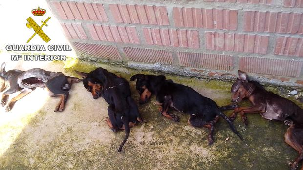 Algunos de los perros encontrados muertos por la Guardia Civil en la residencia