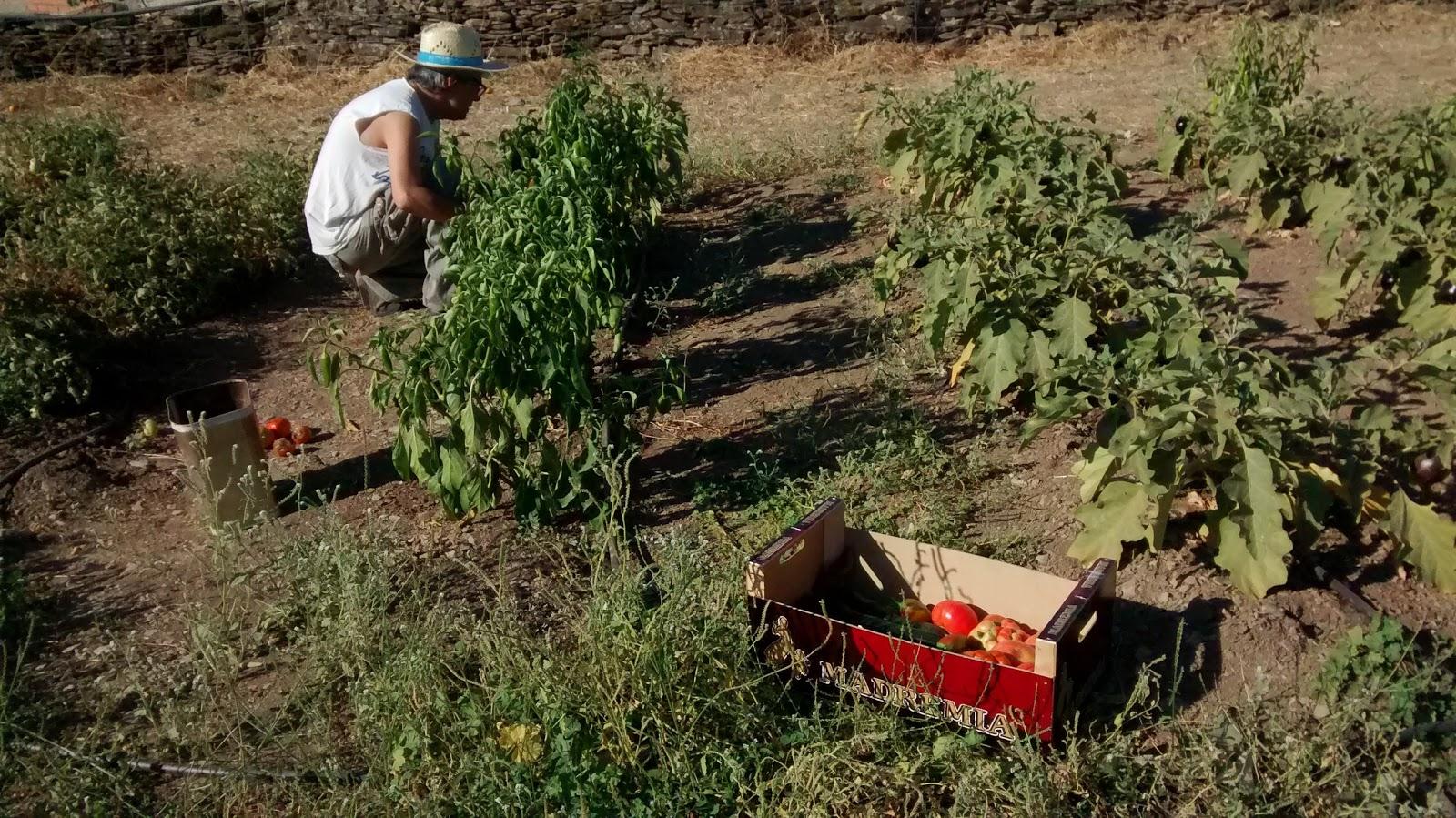 Una de las personas que participan en el proyecto, plantando en la huerta