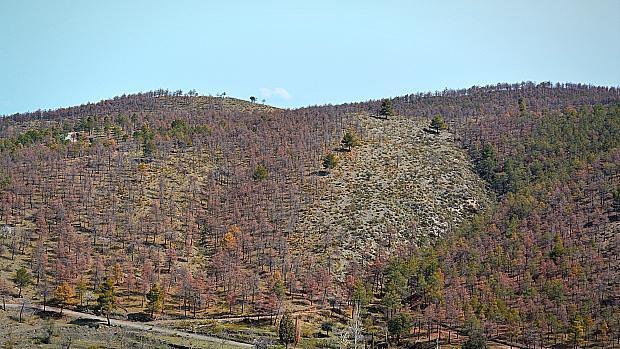 Millones de árboles perecen en la Sierra de Baza, al norte de Granada