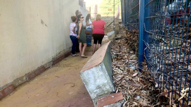 Los árboles ya han desplazado el muro de contención que los separa de las viviendas