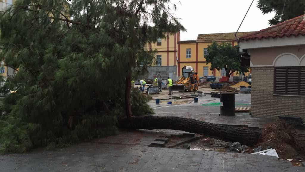 El pino ha caído en la zona de la Glorieta Pío XII