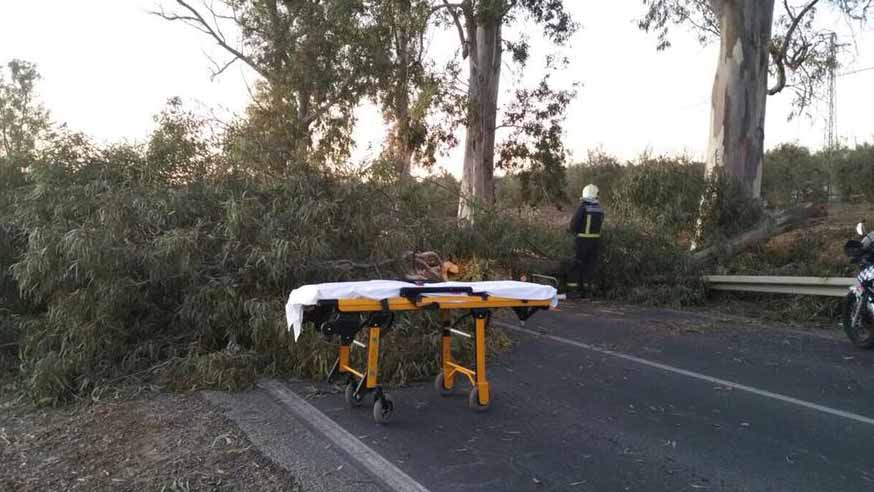 La rama caída cortó prácticamente toda la carretera