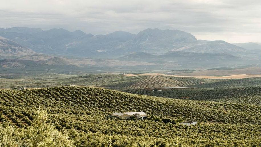 Paisaje de Jaén, provincia con 60 millones de olivos
