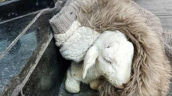 La oveja fue encontrada por una joven en una calle de Linares