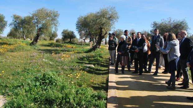En el olivar se experimentan nuevas fórmulas de mantenimiento de las praderas de vegetación