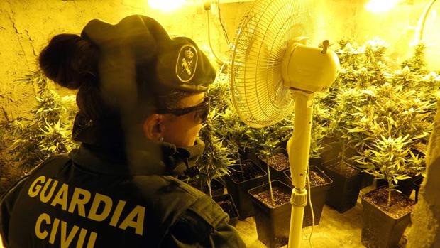 Una agente inspecciona el cultivo de marihuana