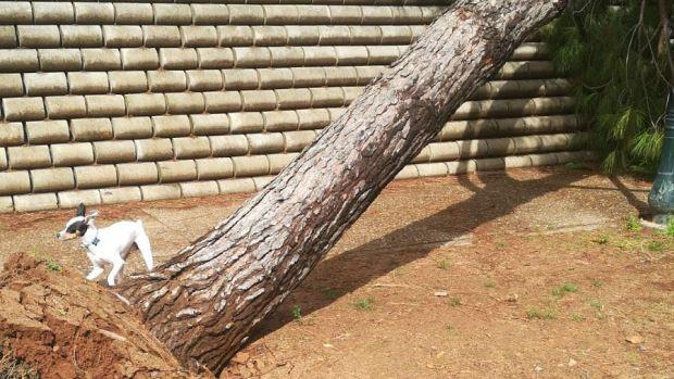 El viento ha arrancado de cuajo un árbol en el Parque Centro