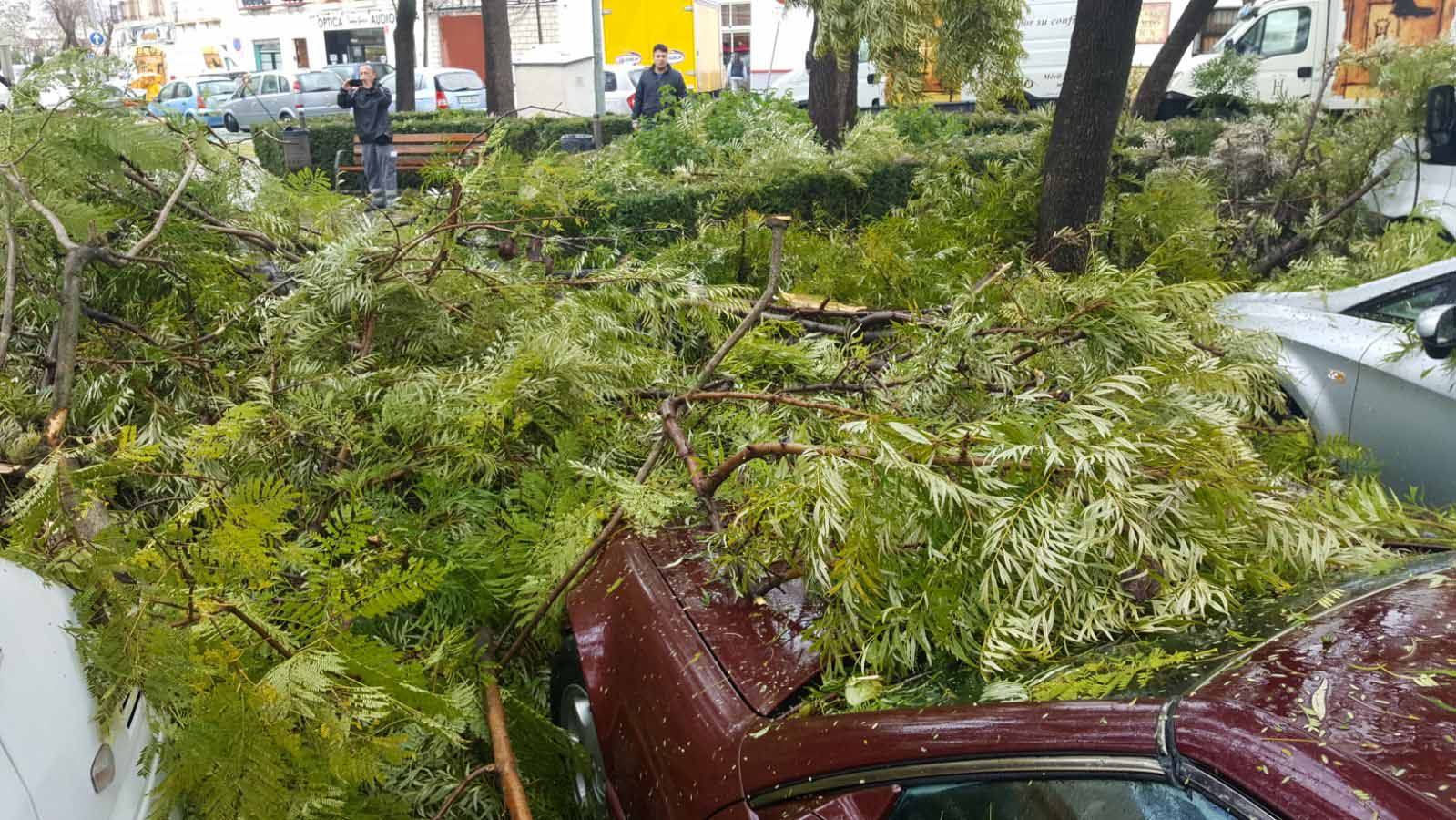 Decenas de árboles han sufrido desprendimientos de ramas en Utrera