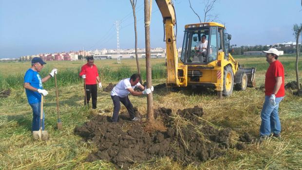 La asociación utrerana ha plantado cientos de árboles en los últimos veinte años
