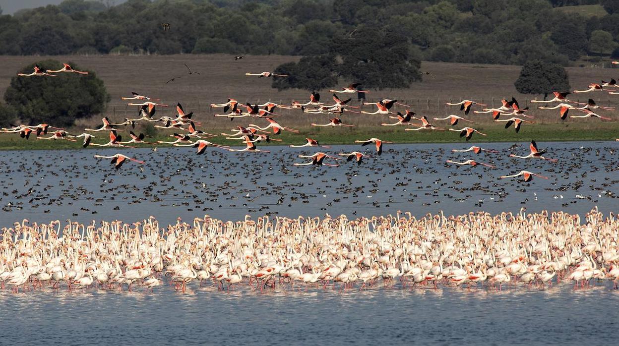 Resultado de imagen de Aves en la Dehesa de Abajo