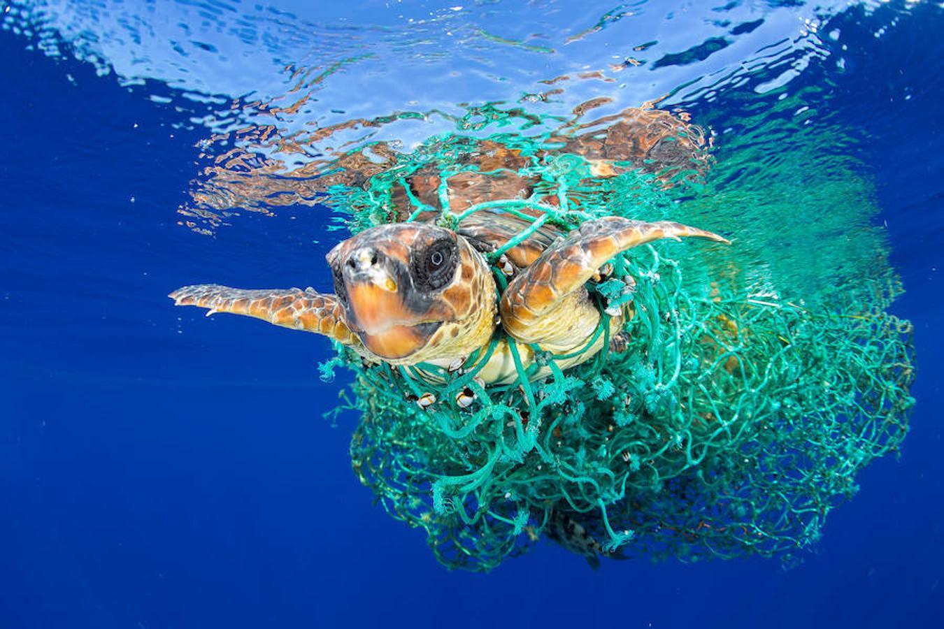 Una tortuga intenta nadar atascada en una red en la costa de Tenerife