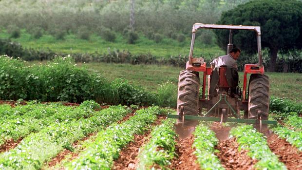 Finca de agricultura ecológica en la provincia de Sevilla