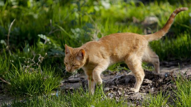Un gato callejero en un jardín