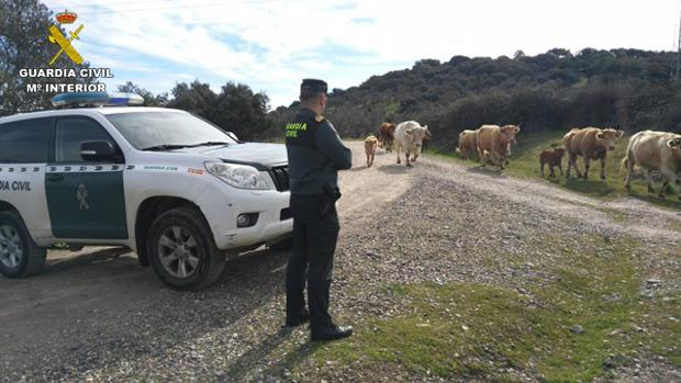 La Guardia Civil, al paso del ganado