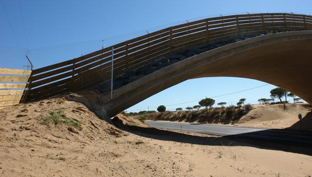 Uno de los puentes para el paso de felinos en Matalascañas