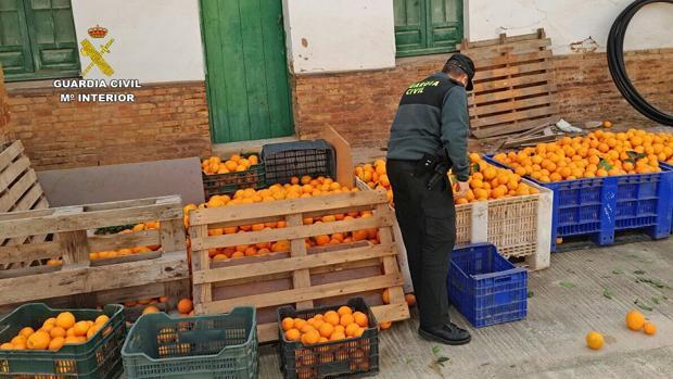 Parte de las naranjas incautadas en Huelva