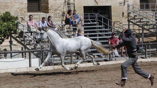 Imagen de una de las sesiones del Concurso Morfológico de Cabalcor celebrado en Caballerizas Reales