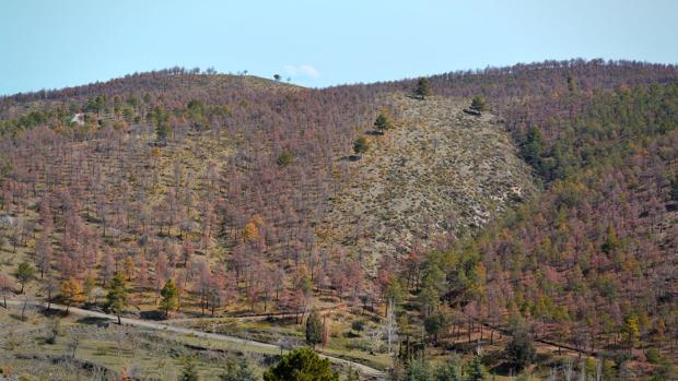 Panorámica de uno de los bosques de la Sierra de Baza
