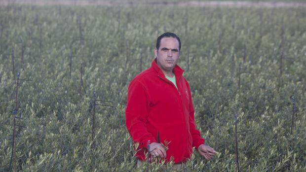 Viveros lucena tiene demanda de olivos hasta el a o 2019 for Viveros en cordoba