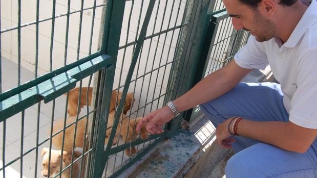Carlos Sánchez, con unos perritos en el Zoosanitario de Almería