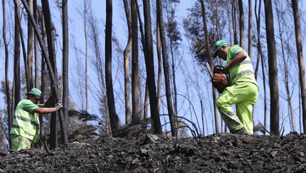 Trabajadores municipales cortan árboles carbonizados junto entre Avelar y Pedrogao Grande en Portugal