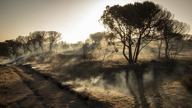 Paraje de Cuesta Maneli tras el incendio