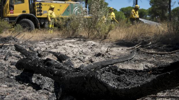 Efectivos del Infoca realizan labores de refresco tras el incendio forestal